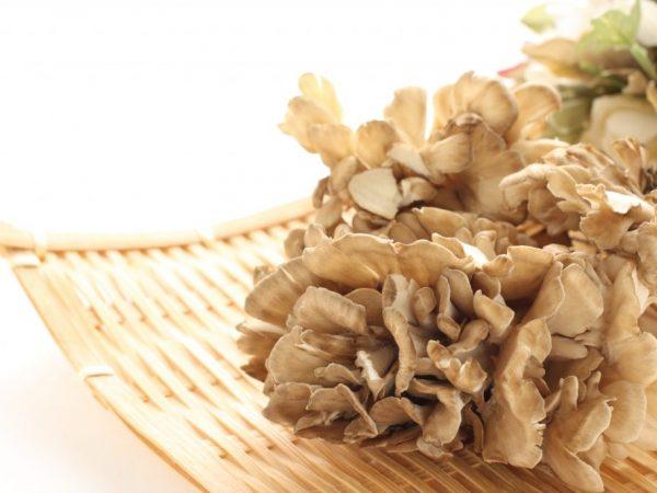 Как выглядит гриб баран