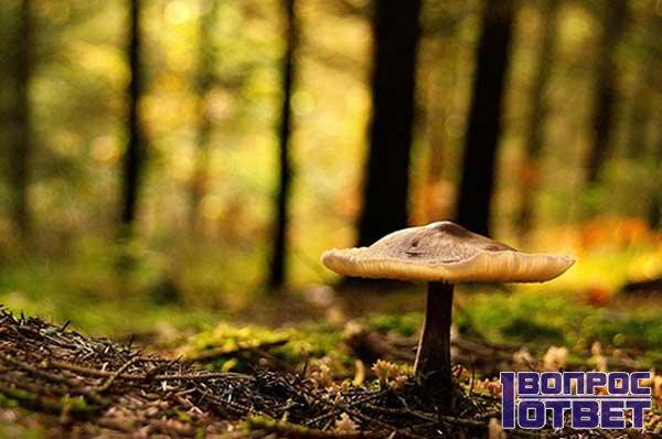 Оптимальная температура для роста грибов в лесу