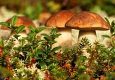 Как быстро растут грибы после дождя осенью