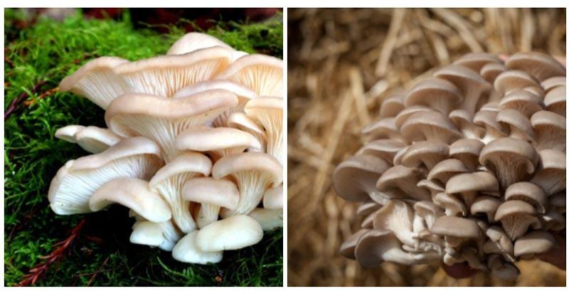 Пропитание в лесу: Древесные грибы трутовики