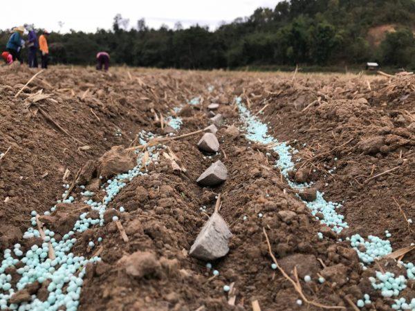 Что внести в почву осенью под картофель