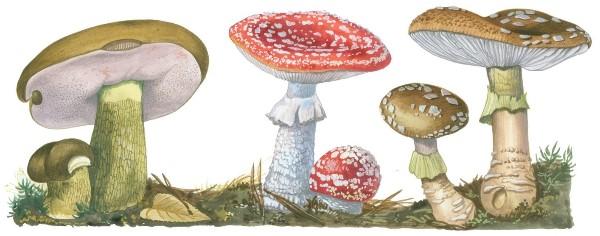 Какого значение дрожжевых грибов в жизни человека
