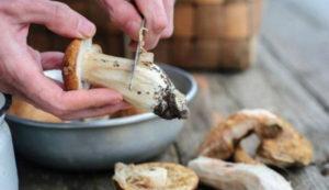 Какие грибы можно есть в сыром виде. Можно ли есть сырые шампиньоны || Какие грибы можно есть сырыми список
