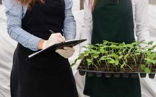 Как защитить рассаду от инфекции