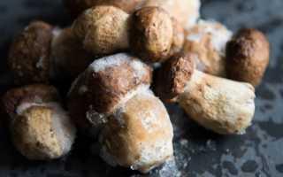 Срок хранения замороженных грибов в морозилке