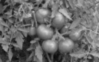 Описание лучших сортов томатов  года