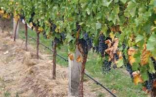 Шпалеры для винограда из пластиковых труб