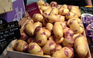 Описание картофеля Синеглазка