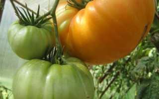 Томатный ананас гавайский: описание и характеристика, особенности посадки и выращивания, болезни и вредители, достоинства и недостатки
