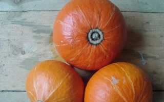 Фундук: описание гибрида, фото плода, отзывы о его выращивании и возможных проблемах, возникающих в процессе (например, тыква не желтеет)