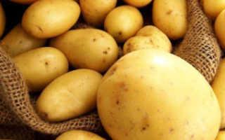 Характеристика картофеля сорта Ривьера