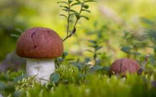 Какие грибы растут в Уфе и где их найти