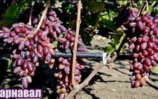 Виноград Карнавал