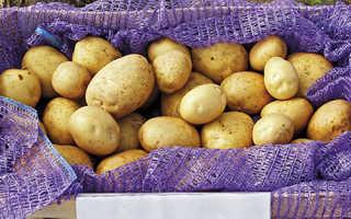 Характеристика картофеля сорта Лилея
