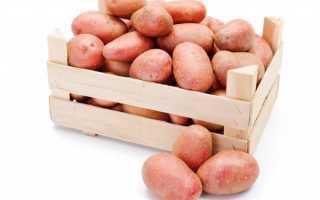 Характеристика картофеля сорта Астерикс
