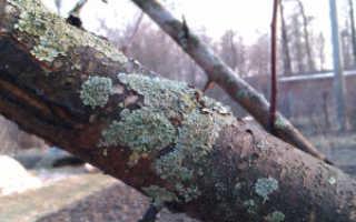 Болезни деревьев  — диагностика и лечение