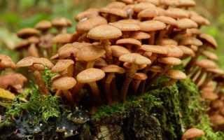 Особенности роста грибов в лесу