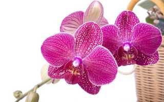 Солнце или тень подходит для орхидеи