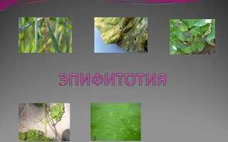 Понятие об эпифитотиях