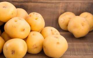 Характеристика картофеля сорта Невский