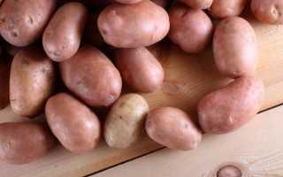 Описание картофеля Сиреневый Туман