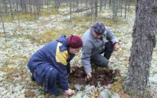 Лесопатология и лесозащита