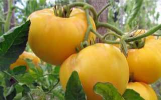 Помидор Жираф: характеристика и описание сорта томатов, обзор сложностей их выращивания и агрономические советы
