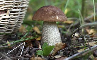 Можно ли есть червивые грибы