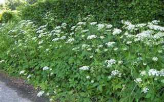 Как использовать гербициды на приусадебном участке