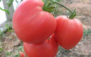 Описание и характеристика сорта томатов Бычье сердце