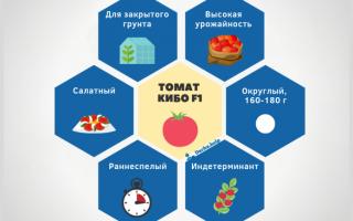 Описание томата Кибо