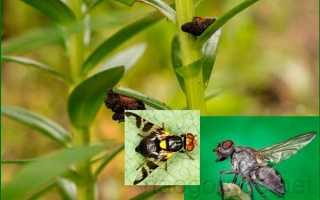 Садовые вредители: особенности обработки