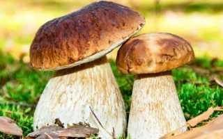 Какие грибы растут в Тульской области