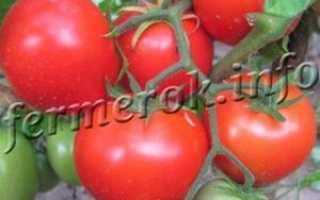 Характеристика и описание помидор сорта Санька