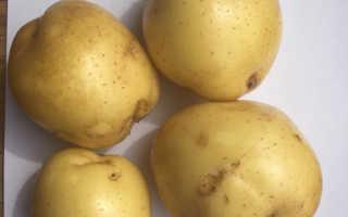 Характеристика картофеля Молли