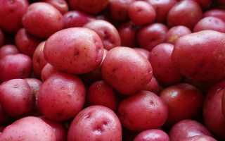 Характеристика картофеля сорта Любава