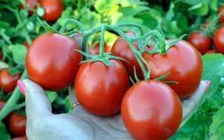 Помидор на тарелке: характеристика и описание сорта, особенности выращивания