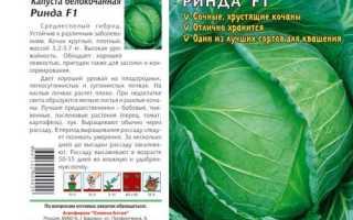 Характеристика капусты сорта Ринда f1