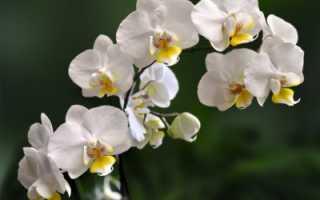 Уход за орхидеями осенью, в том числе октябрьскими, на подоконнике в домашних условиях, как транспортировать растение зимой и другие особенности жизненного цикла цветка; Интернет-портал о сельском хозяйстве