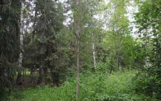 Общие сведения о древесных растениях и их свойствах