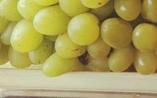 """Виноград """"галахад"""": описание сорта, фото и отзывы"""