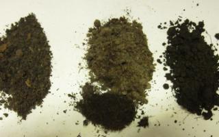 Как приготовить грунт для цитрусовых