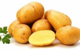 Характеристика картофеля сорта Ласунок