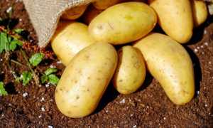 Оптимальная температура для хранения картофеля – как уберечь летний урожай от зимы?