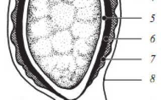 Особенности спор грибов