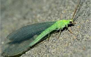 Полезные и вредные насекомые сада и огорода