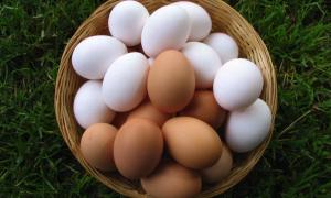 Химический состав и пищевая ценность яиц, строение куриных яиц