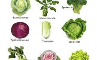 Описание лучших сортов ранней капусты