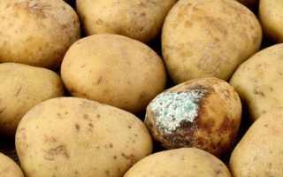 Болезни картофеля и методы борьбы с ними