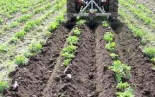 Применение Корадо от колорадского жука на картофеле